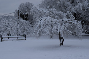 """Zach looked out the window this morning and his first comment was """"The trees are even covered with snow"""" This is our front yard beside the house."""